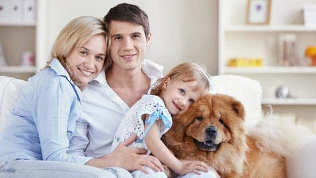 Wills & Trusts dog-young-family Direct Wills Fulwell